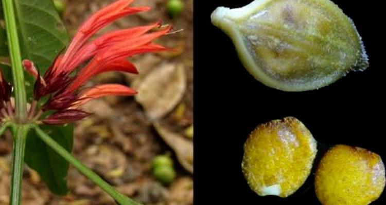 Grandioso aporte científico: hallan nueva especie de planta en bosque de Junín y Pasco