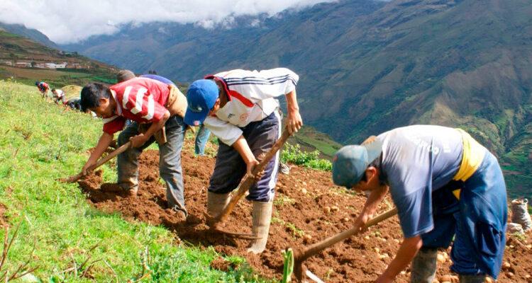 Midagri: gremios agrarios contribuyen a construir segunda reforma agraria
